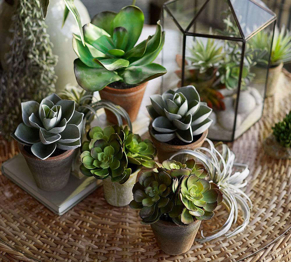 Potted Faux Echevaria Succulent