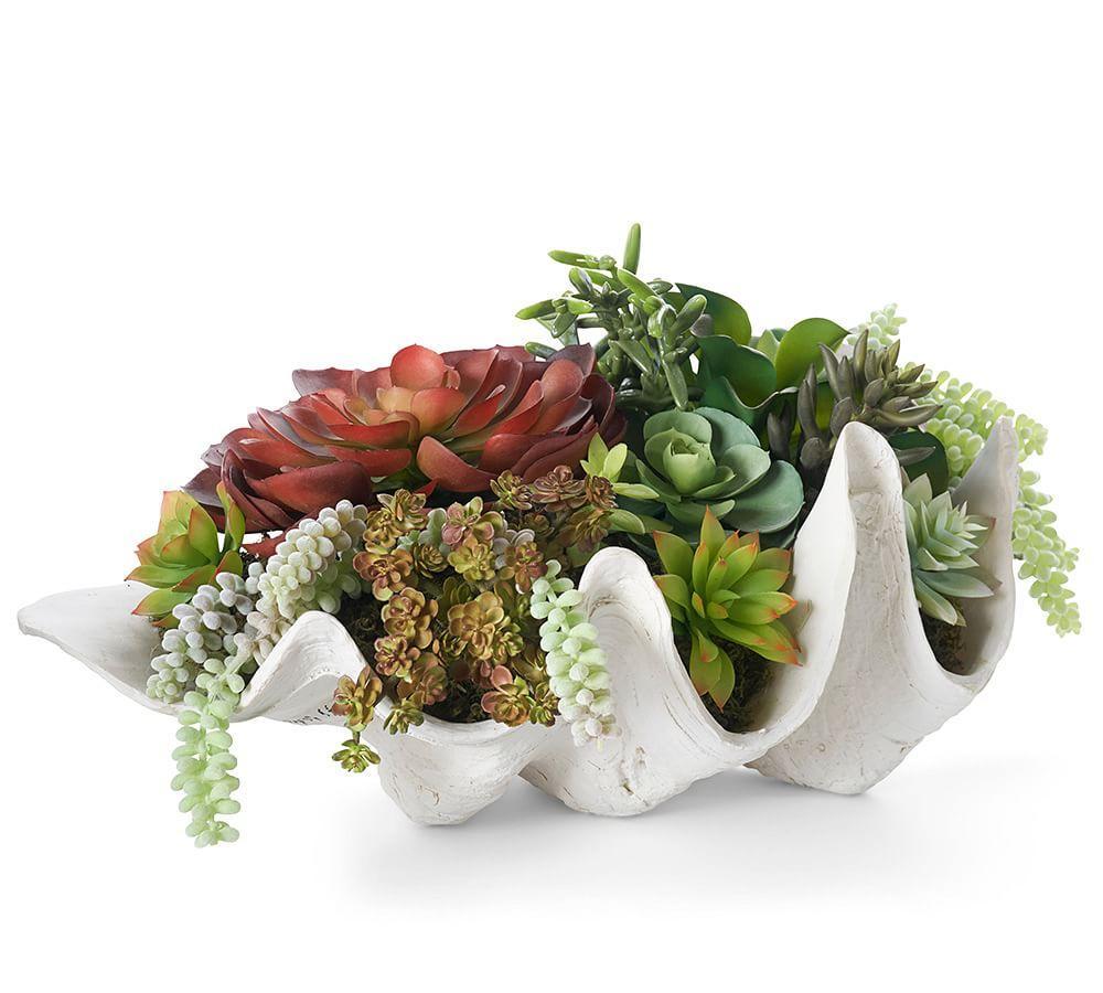 Faux Clam Succulent