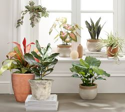 Vases & Botanicals