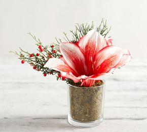 Faux Variegated Amaryllis Arrangement