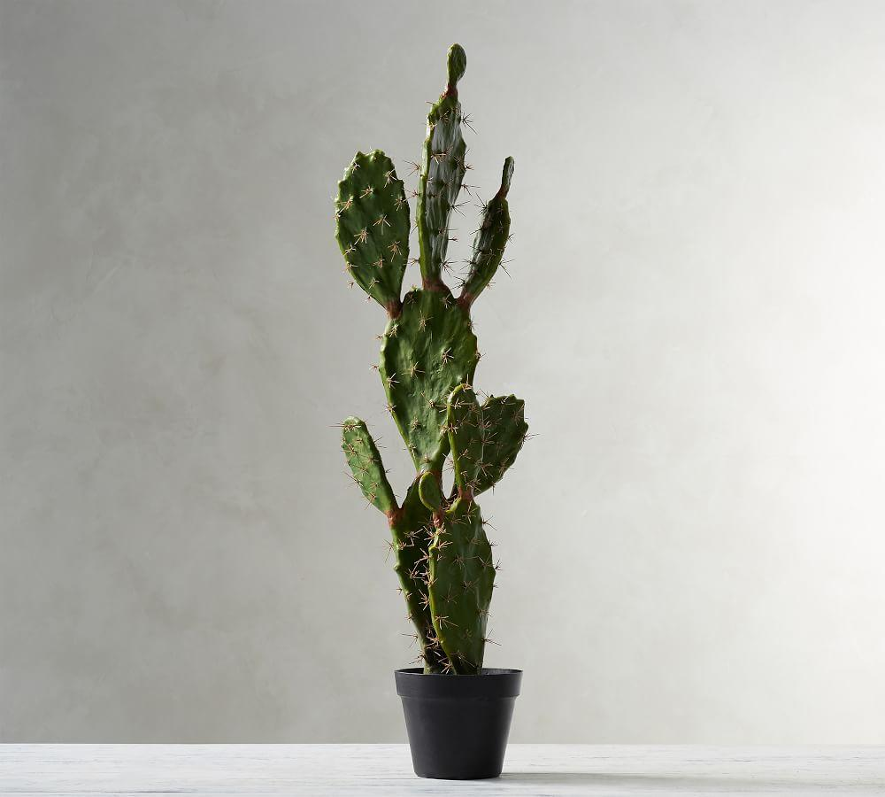 Large Potted Opuntia Cactus
