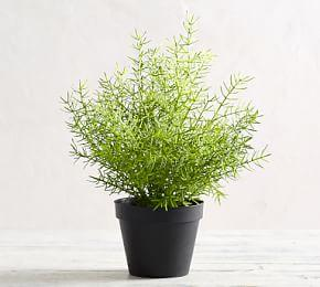 Faux Potted Asparagus Fern